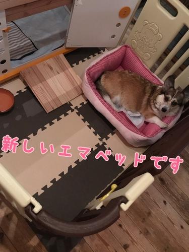 IMG_2704.JPG